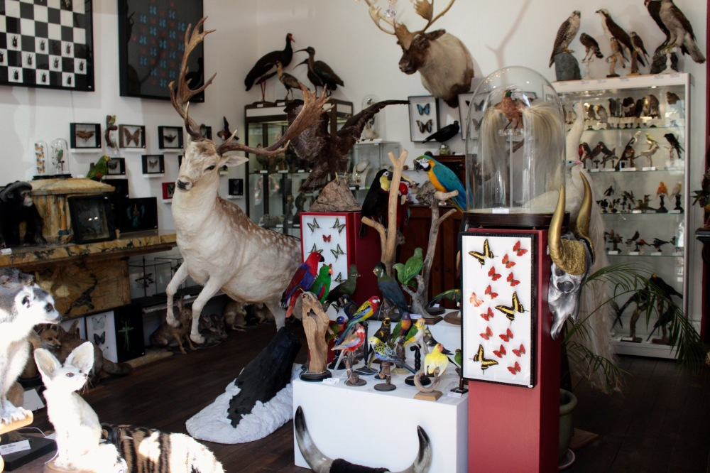 taxidermie 75003